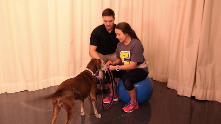 physical therapist instructs patient how to walk a dog