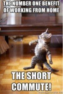 Short Commute Cat Work from Home Meme