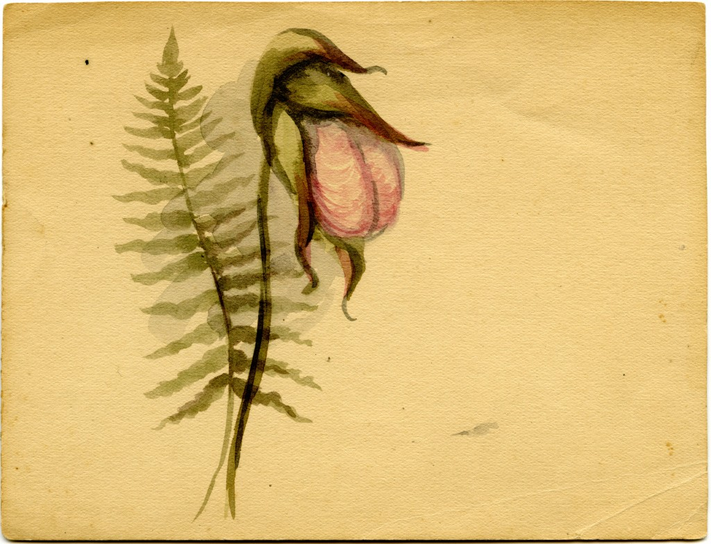 Pink lady slipper and fern painting, undated, Emma Bell Miles Southern Appalachia art and correspondence, Special Collections, University of Tennessee at Chattanooga