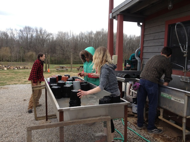 Washing pots at Crabtree Farms is cold work