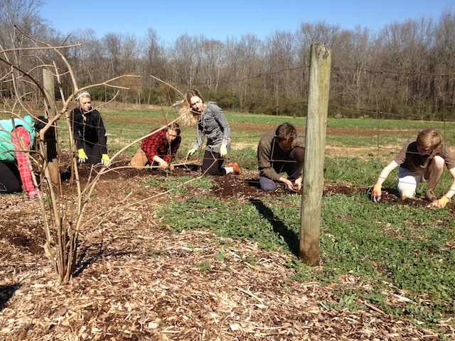 Students prepare the ground for a four-year crop of asparagus.