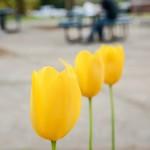 campus-spring-69