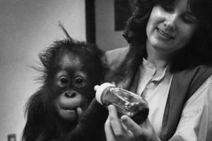Baby Chantek and Dr. Lyn Miles