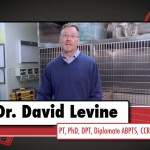 David Levine on Dog TV