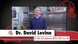 David Levine on Dog TV