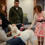 therapy-dogs-2015-15