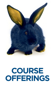 Rabbit with Course Offerings