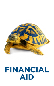 Turtle with financial aid
