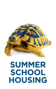 Turtle with Summer School Housing