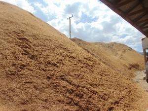 rice husks tanzania
