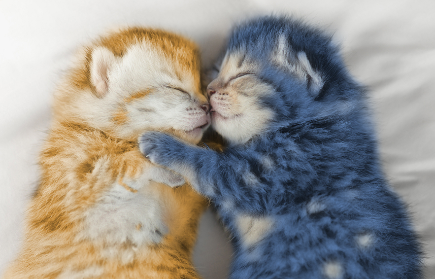 Cute tabby kittens sleeping and hugging on white bed