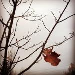 winter approacheth